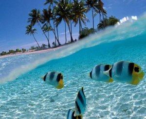 buvar, buvarkodas, buvartura, Maldiv-szigetek, melydel szafari, honor legacy